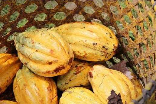 To'ak Chocolatier - Luxury Dark Chocolate from Ecuador